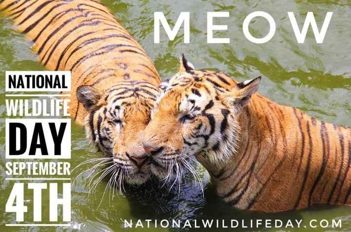 🦍 वाइल्ड लाइफ डे - MEOW NATIONAL WILDLIFE DAY SEPTEMBER 4TH NATIONAL WILDLIFEDAY . COM - ShareChat