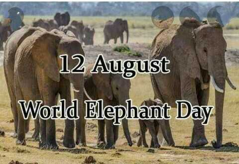 🐘 विश्व हाथी दिवस - 12 August World Elephant Day - ShareChat