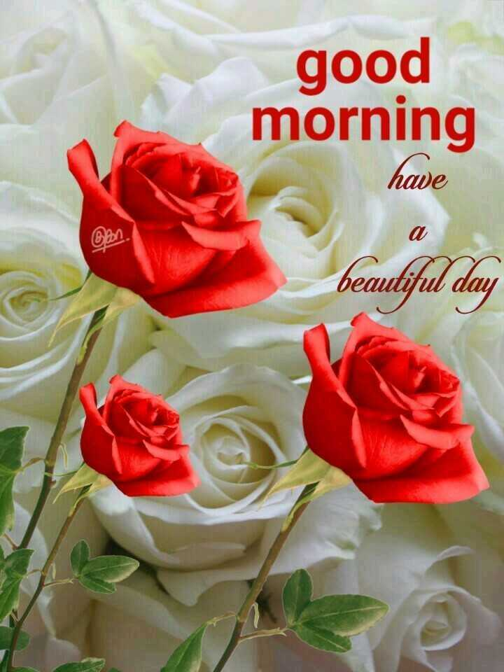 📲 वीडियोग्राफी - good morning have Ban . beautiful day - ShareChat