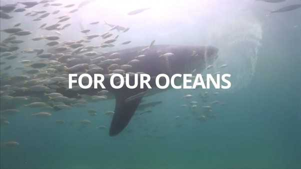 🦈 शार्क जागरूकता दिवस - FOR OUR OCEANS - ShareChat