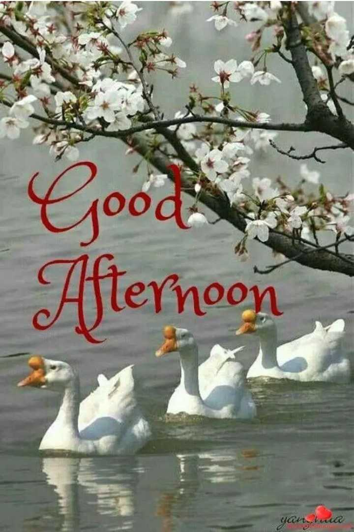 शुभदुपार - Good Afternoon ya kuwa - ShareChat