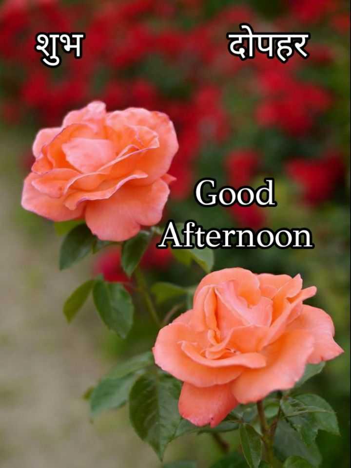 🕛 शुभ दोपहर☺ - शुभ शभ दोपहर Good Afternoon - ShareChat
