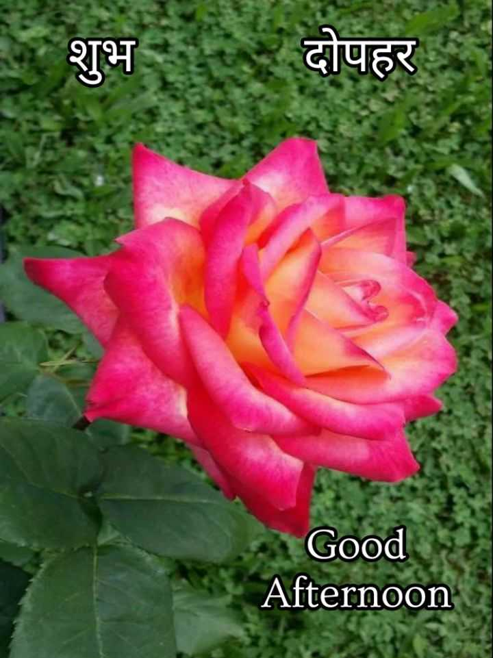 🕛 शुभ दोपहर☺ - शुभ : दोपहर Good Afternoon - ShareChat