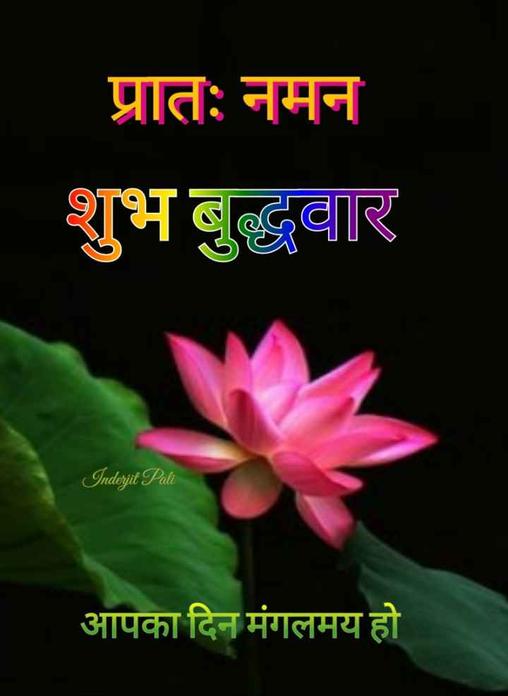 🌷शुभ बुधवार - प्रातः नमन शुभ बुद्धवार Inderjit Pali आपका दिन मंगलमय हो - ShareChat