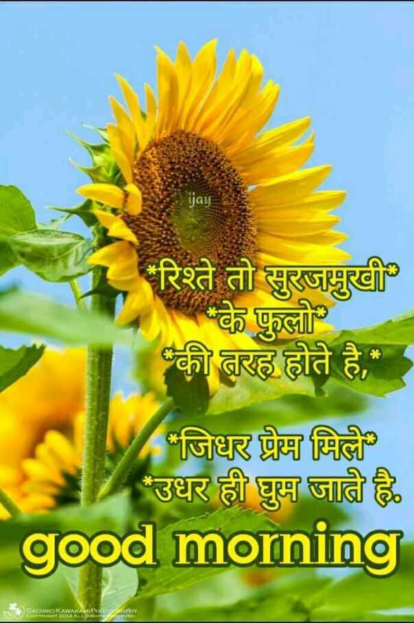 🌷शुभ बुधवार - ijay ' रिश्ते तो सुरजमुखी के फुलो की तरह होते है , जिधर प्रेम मिले ' उधर ही घुम जाती है good morning SAKAWAKASPHATARI 2014 ALL NIGHT - ShareChat