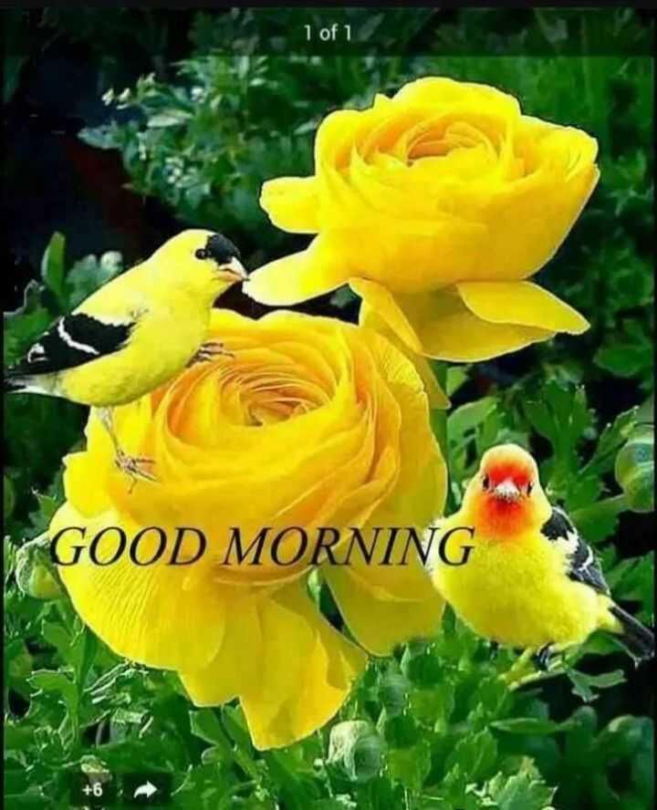 🌷शुभ बुधवार - 1 of 1 GOOD MORNING + 6 - ShareChat