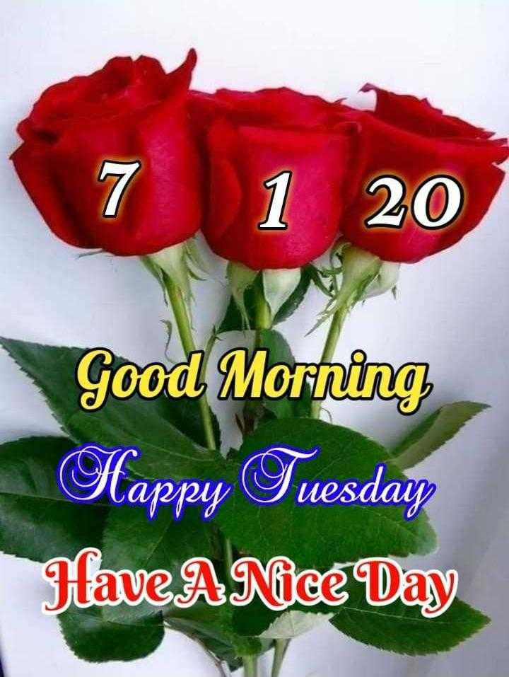 🌷शुभ मंगलवार🌷 - 1 20 Good Morning Happy Tuesday Have A Nice Day - ShareChat