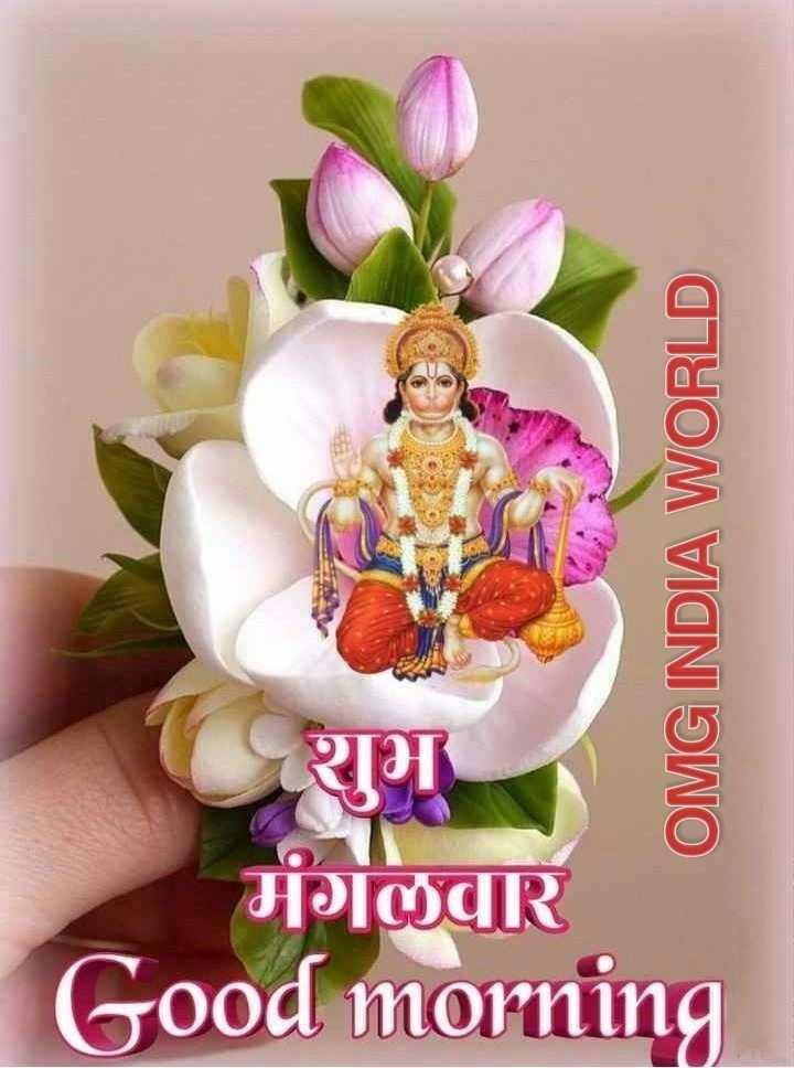 🌷शुभ मंगलवार - OMG INDIA WORLD D मंगलवार Good morning - ShareChat