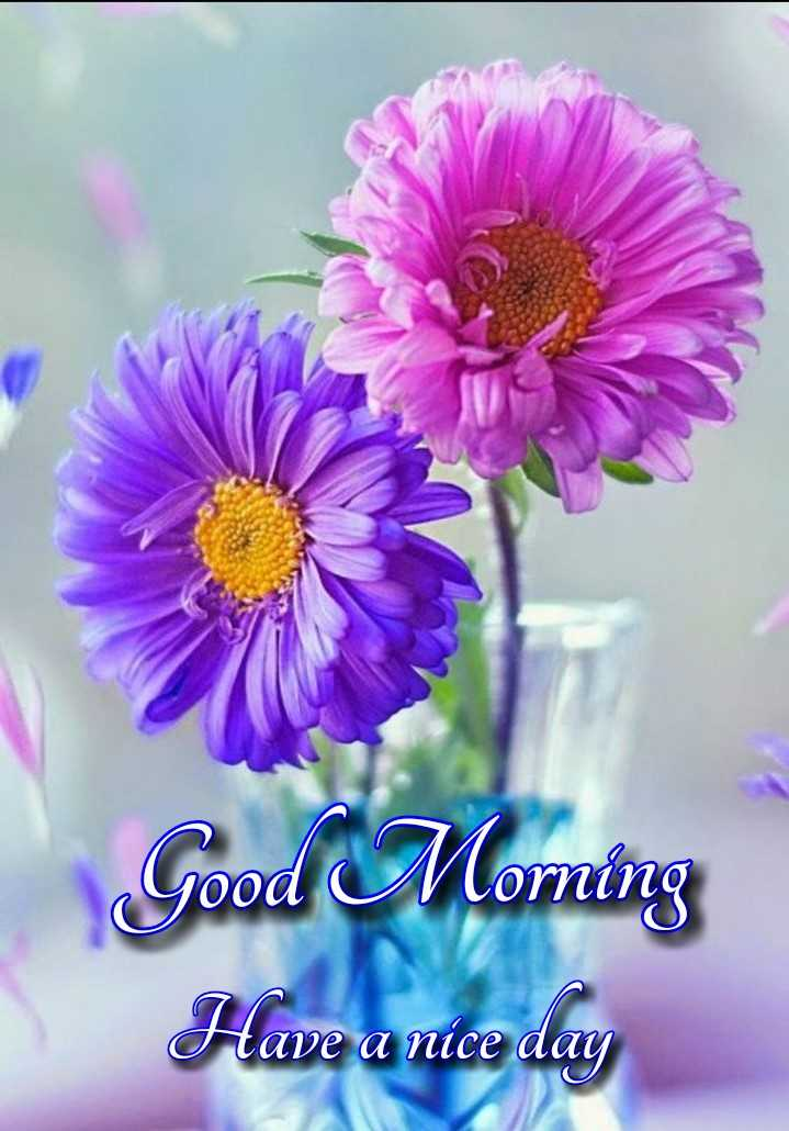 🌷शुभ मंगलवार - Good Moming Have a nice day - ShareChat