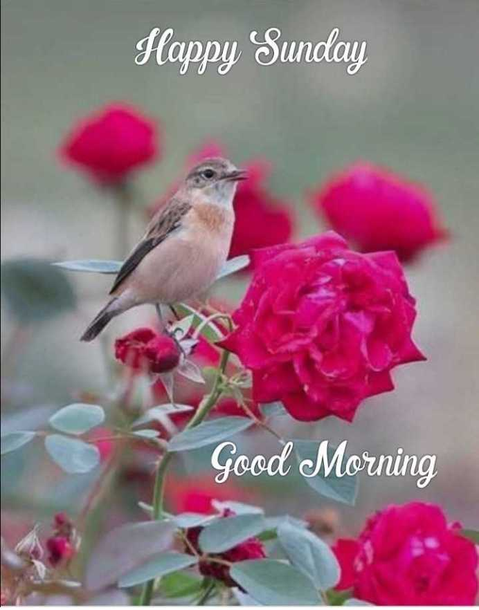 🌷शुभ रविवार - Flappy Sunday Good Morning - ShareChat