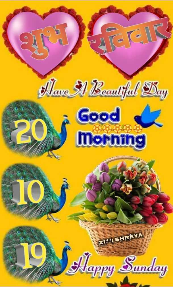 🌷शुभ रविवार - GALE Have A Beautiful Day Nave eautiful Good Morning Ziddi SHRËYA Nappy unday - ShareChat