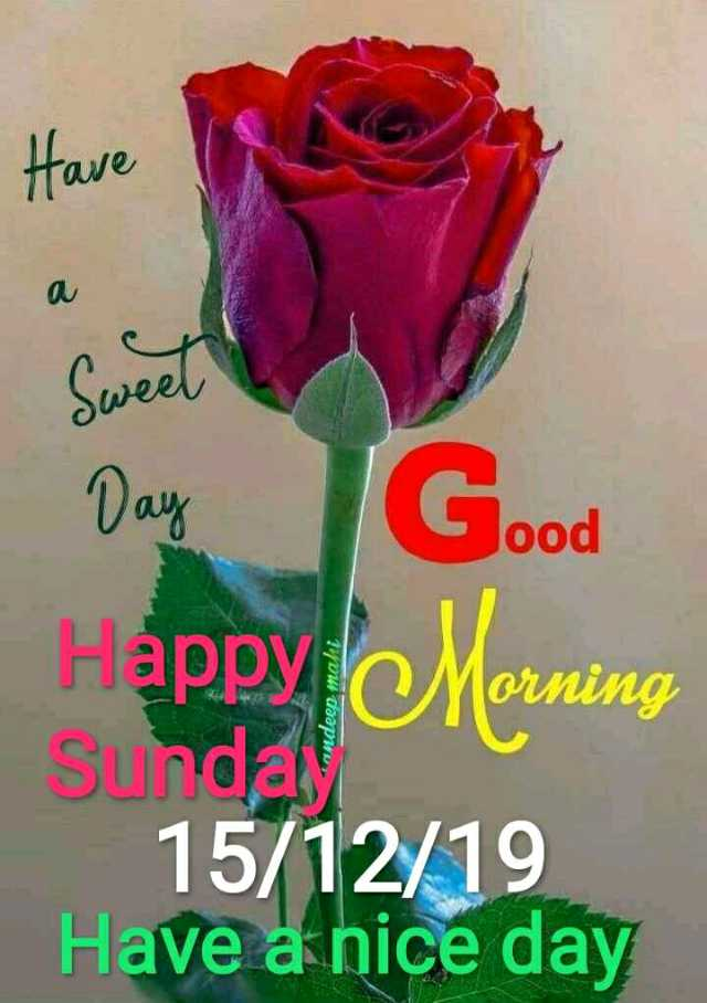 🌷शुभ रविवार - Have lood Day Happy Good Morning Sunday 15 / 12 / 19 Have a nice day - ShareChat
