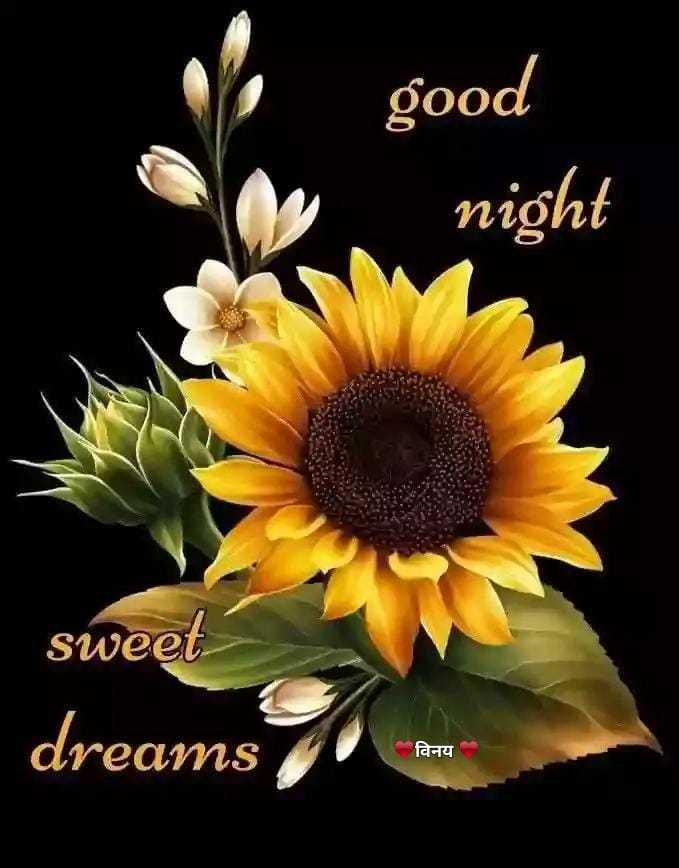 🌙शुभरात्रि - good night sweet dreams विनय - ShareChat