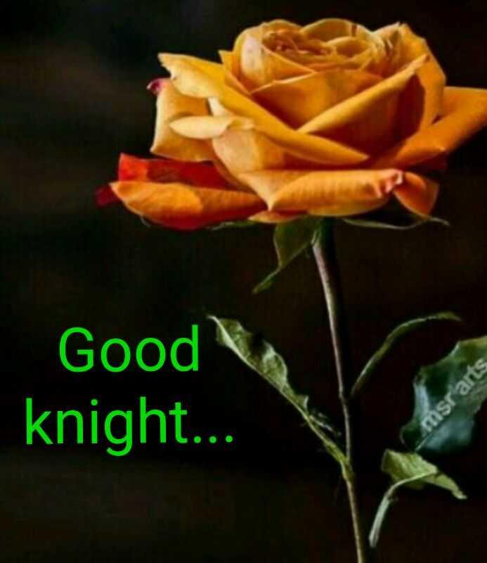 🌙शुभरात्रि - Good knight . . . msr arts - ShareChat