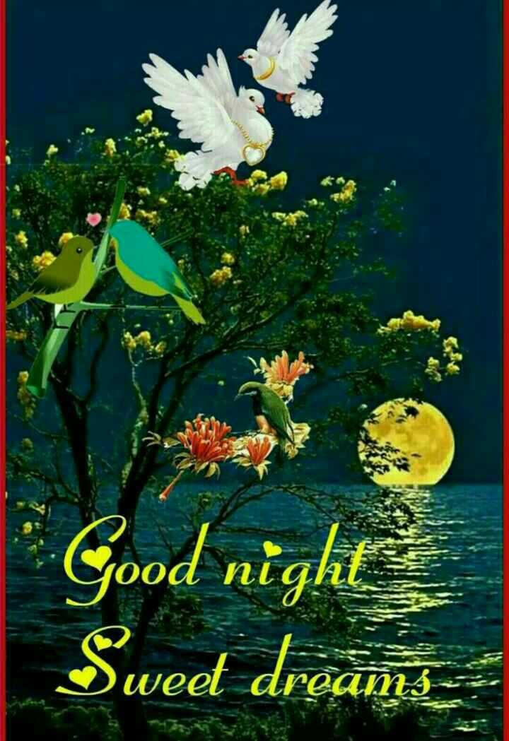 🌙शुभरात्रि - ood NL Good night Sweet dreams - ShareChat