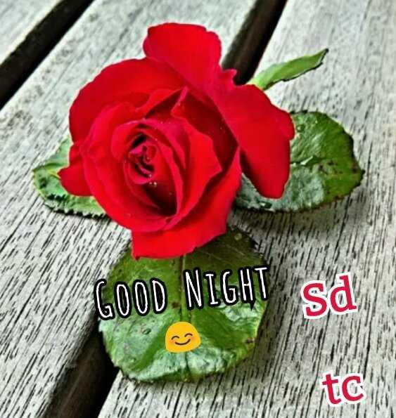 😴शुभ रात्री - GOOD NIGHV say - ShareChat