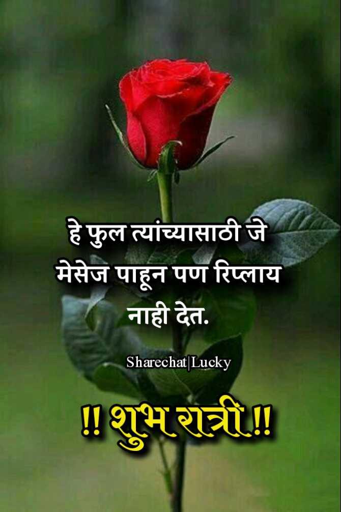 😴शुभ रात्री - हे फुल त्यांच्यासाठी जे मेसेज पाहून पण रिप्लाय नाही देत . Sharechat | Lucky ! ! शुभ रात्री ! ! - ShareChat