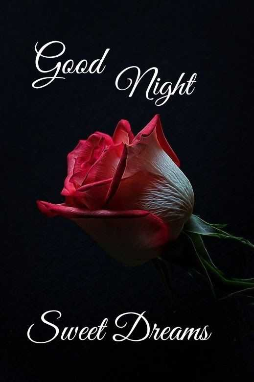 😴शुभ रात्री - Goed Night Sweet Dreams - ShareChat