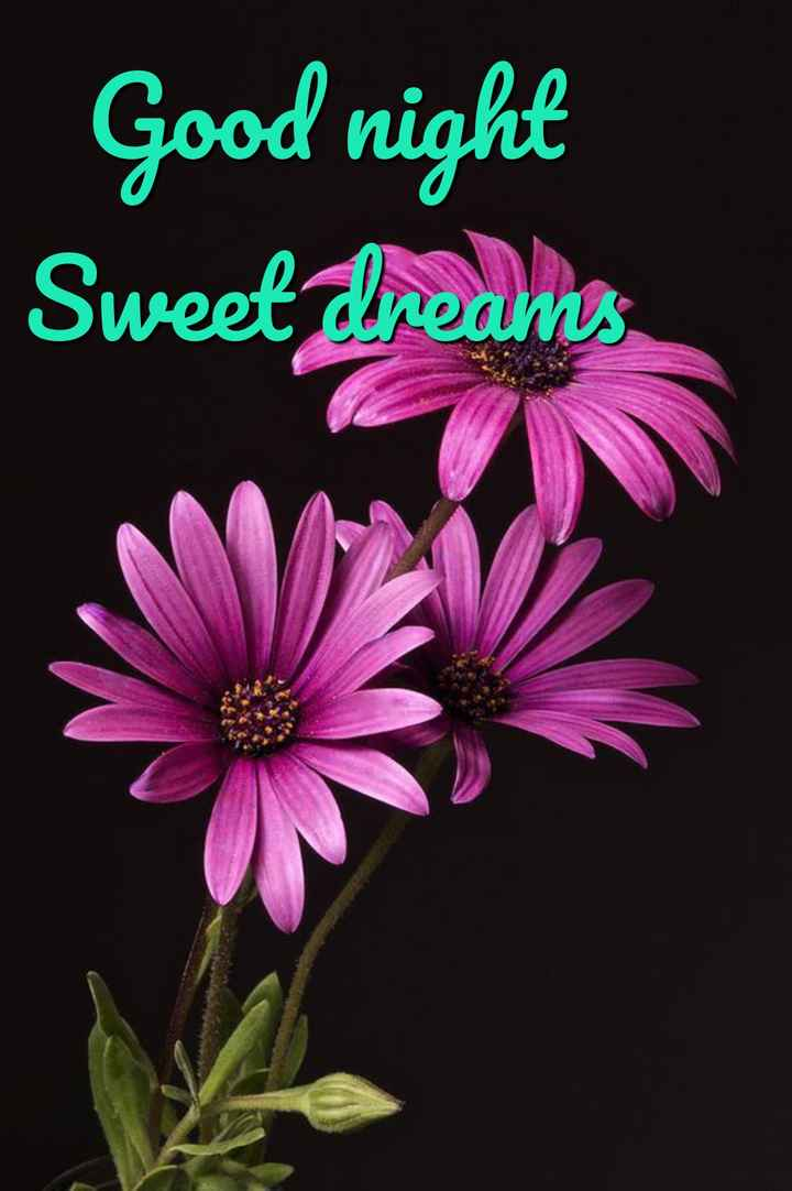 😴शुभ रात्री - Good night Sweet Preamos - ShareChat