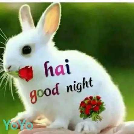 😴शुभ रात्री - hai good night YOY - ShareChat