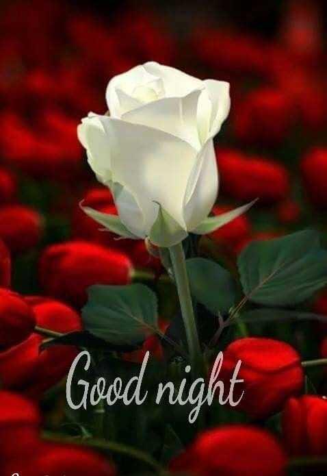 😴शुभ रात्री - Good night - ShareChat