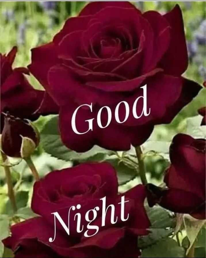 😴शुभ रात्री😴 - Good Night - ShareChat