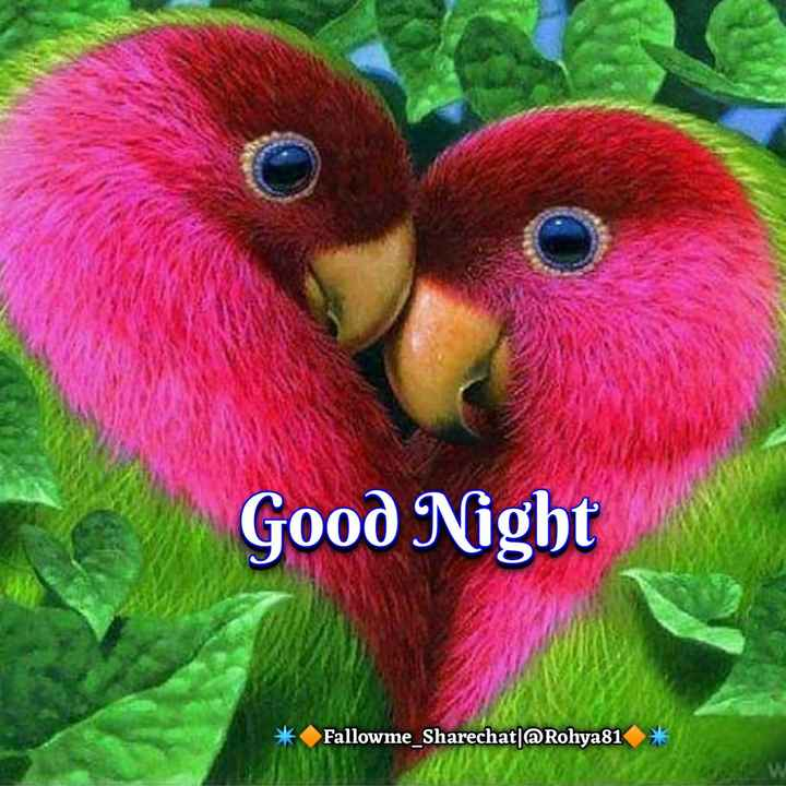 😴शुभ रात्री😴 - Good Night * Fallowme _ Sharechat ] @ Rohya81 - ShareChat