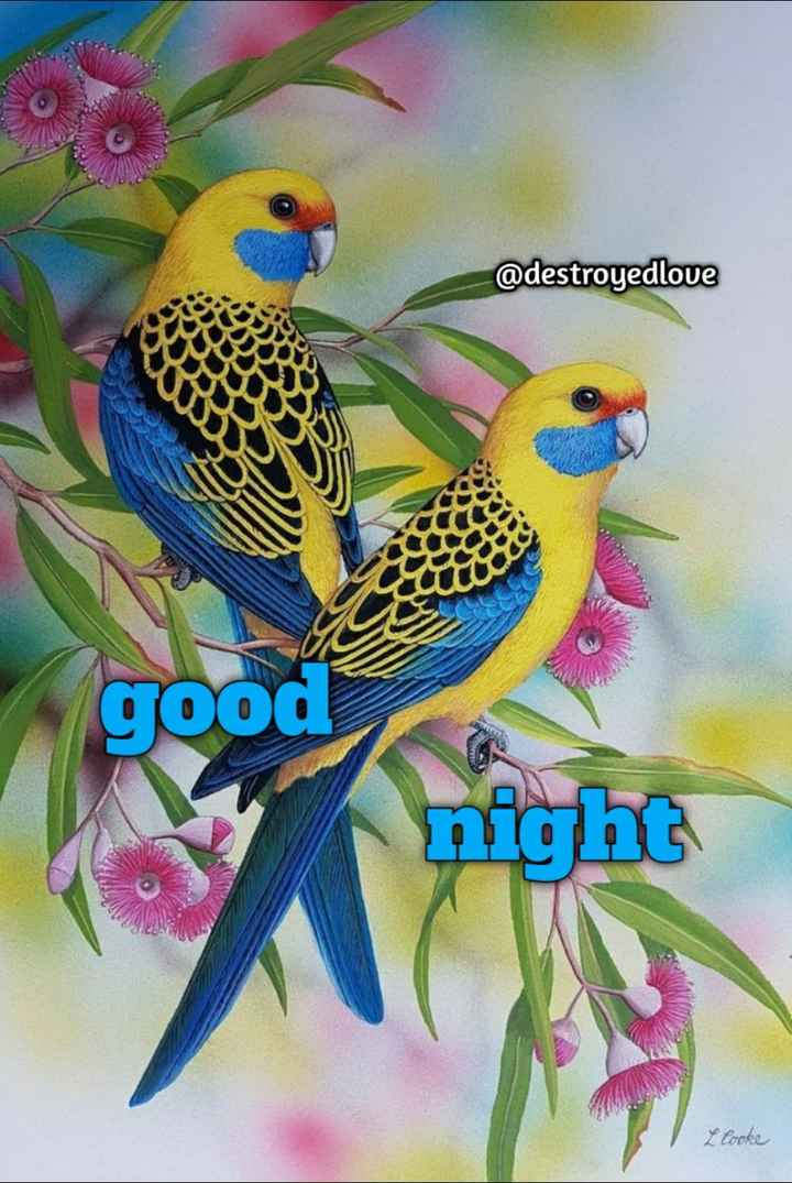 😴शुभ रात्री - @ destroyedlove good night L Cooke - ShareChat