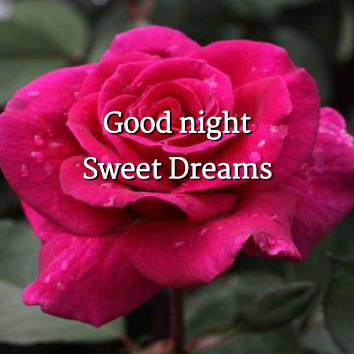 😴शुभ रात्री - Good night Sweet Dreams - ShareChat