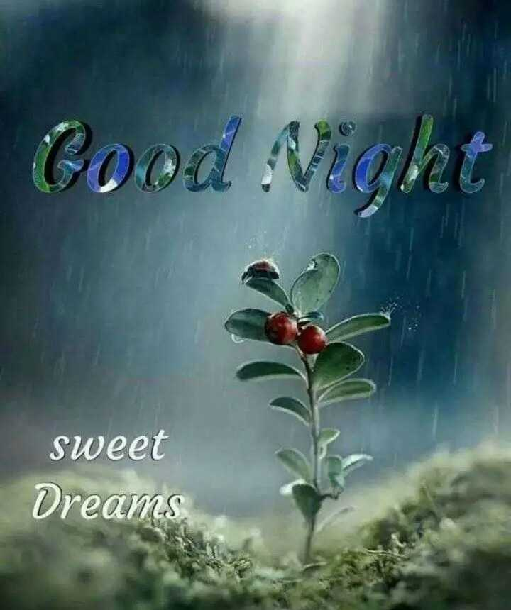 😴शुभ रात्री - Cova Aright sweet Dreams - ShareChat