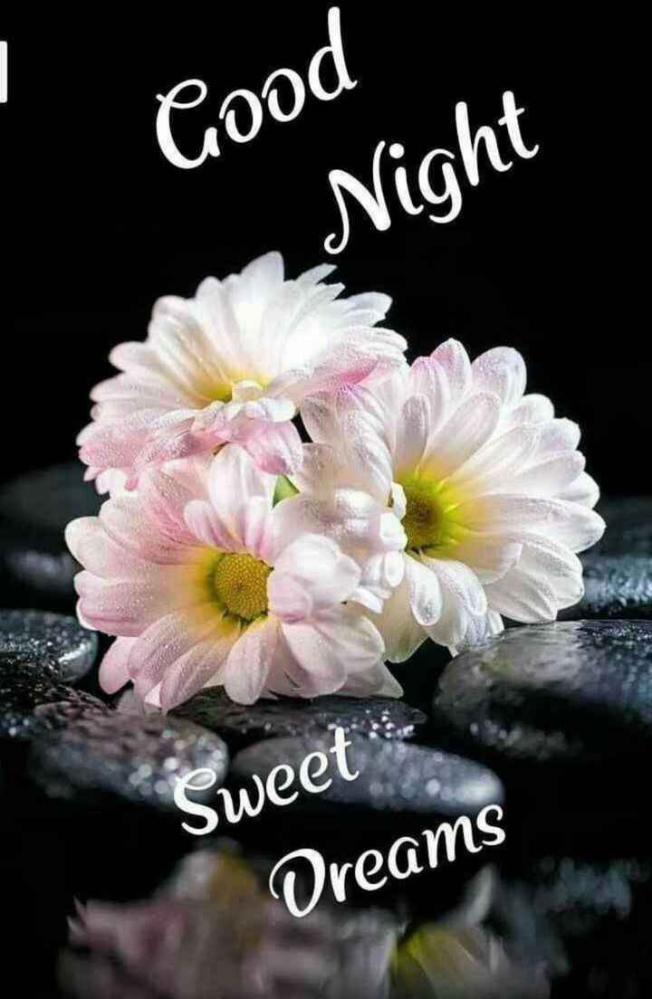 😴शुभ रात्री - Good _ Night Sweet Dreams - ShareChat