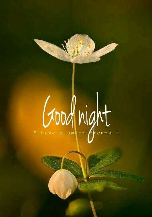 😴शुभ रात्री - Good night * have a sweet pire airs * - ShareChat