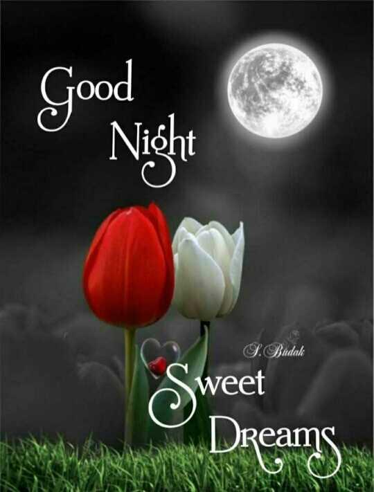 😴शुभ रात्री - Good g Night Sweet S . Budak weet Dreams - ShareChat