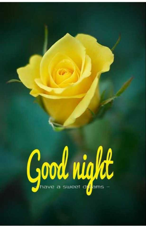 😴शुभ रात्री😴 - Good night have a sweet dams – - ShareChat