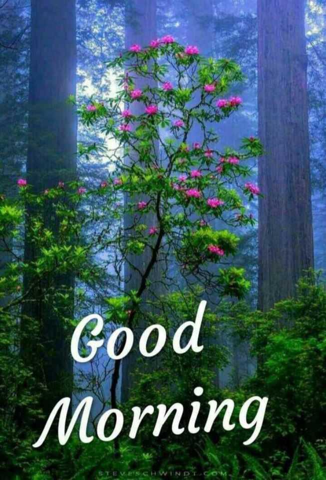 🌷शुभ शनिवार - Good Morning - ShareChat