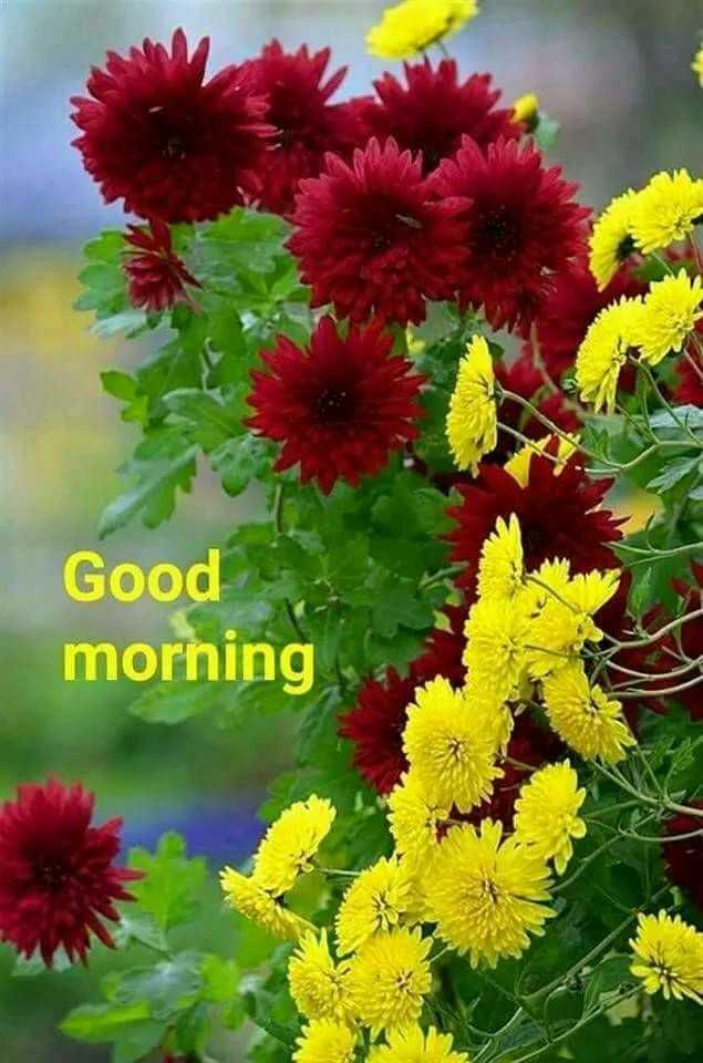 🌜शुभ संध्या🌜 - Good morning - ShareChat