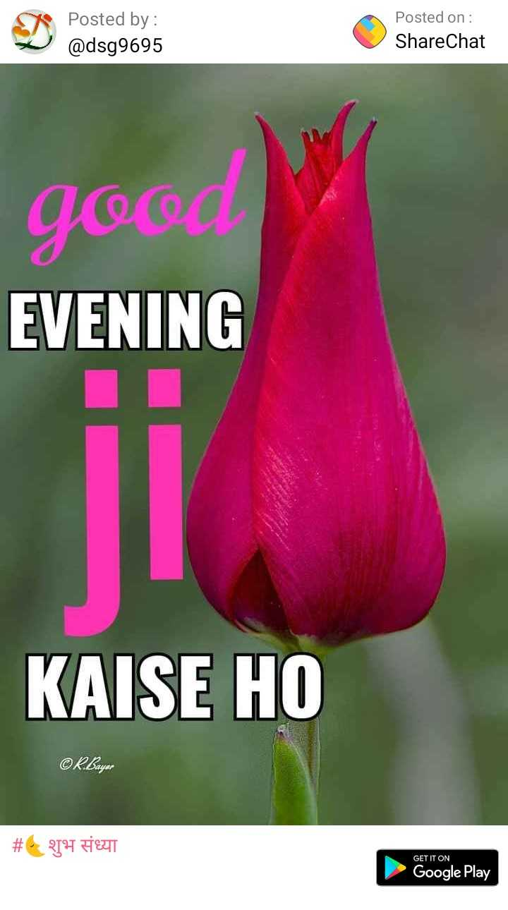 🌜शुभ संध्या - Posted by : Posted on : ShareChat @ dsg9695 good EVENING KAISE HO # 6 QIH DEUT GET IT ON Google Play - ShareChat