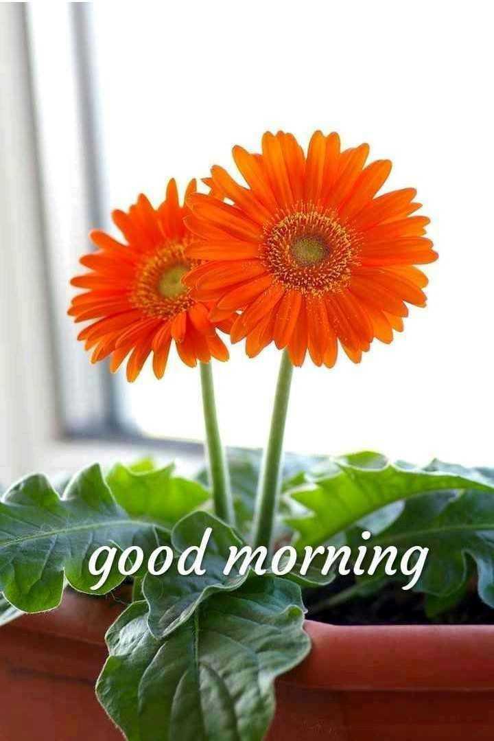 शुभ सकाळ..😊 - good morning - ShareChat