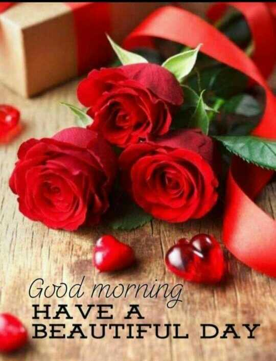 🌹 शुभ सकाळ 🌹 - Good morning HAVE A BEAUTIFUL DAY - ShareChat