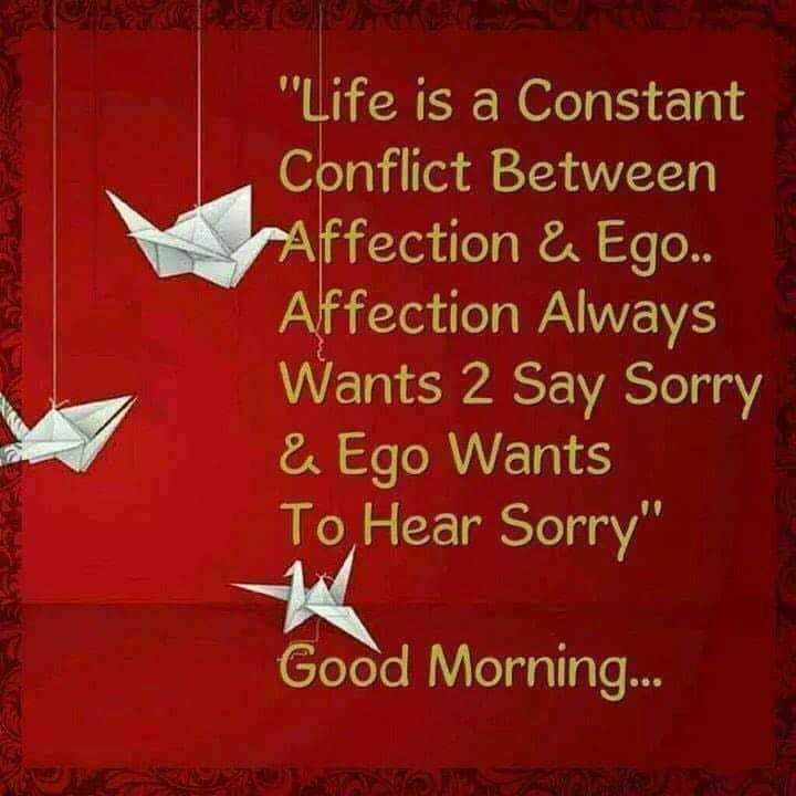 🔖शेअरचॅट स्टिकर्स - Life is a Constant Conflict Between Affection & Ego . . Affection Always Wants 2 Say Sorry & Ego Wants To Hear Sorry Good Morning . . . - ShareChat