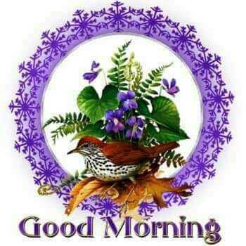 👌शेयरचैट टैलेंट खोज - Good Morning - ShareChat