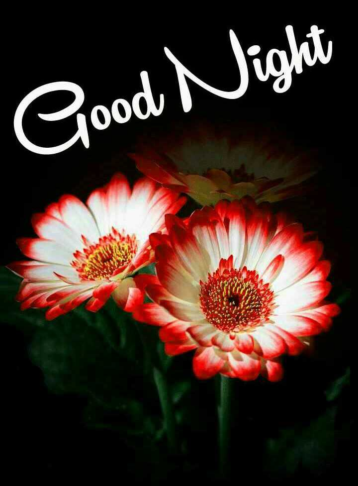 👌शेयरचैट टैलेंट खोज - Good Night - ShareChat