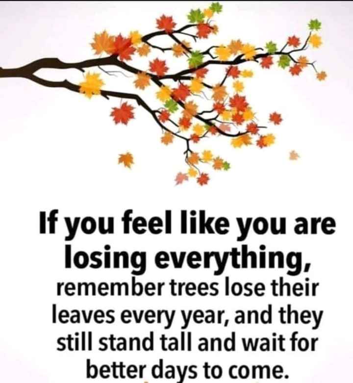 🖋 शेयरचैट Quotes - If you feel like you are losing everything , remember trees lose their leaves every year , and they still stand tall and wait for better days to come . - ShareChat