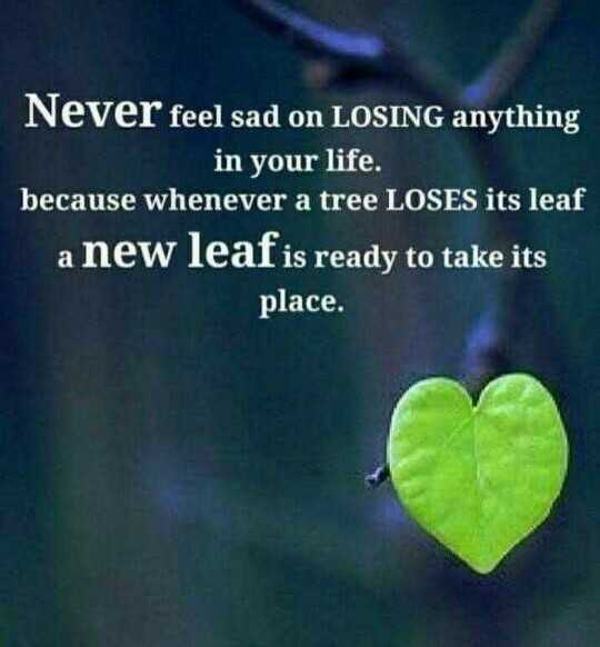 🖋 शेयरचैट Quotes - Never feel sad on LOSING anything in your life . because whenever a tree LOSES its leaf a new leaf is ready to take its place . - ShareChat
