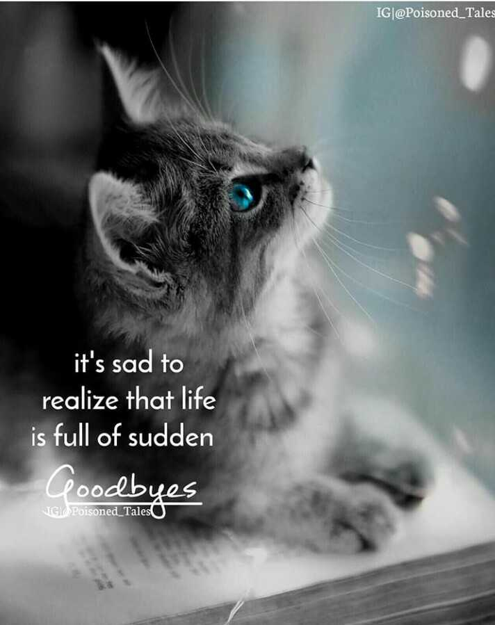 🖋 शेयरचैट Quotes - IG @ Poisoned _ Tales it ' s sad to realize that life is full of sudden Goodbyes JGkPoisoned _ Tales - ShareChat