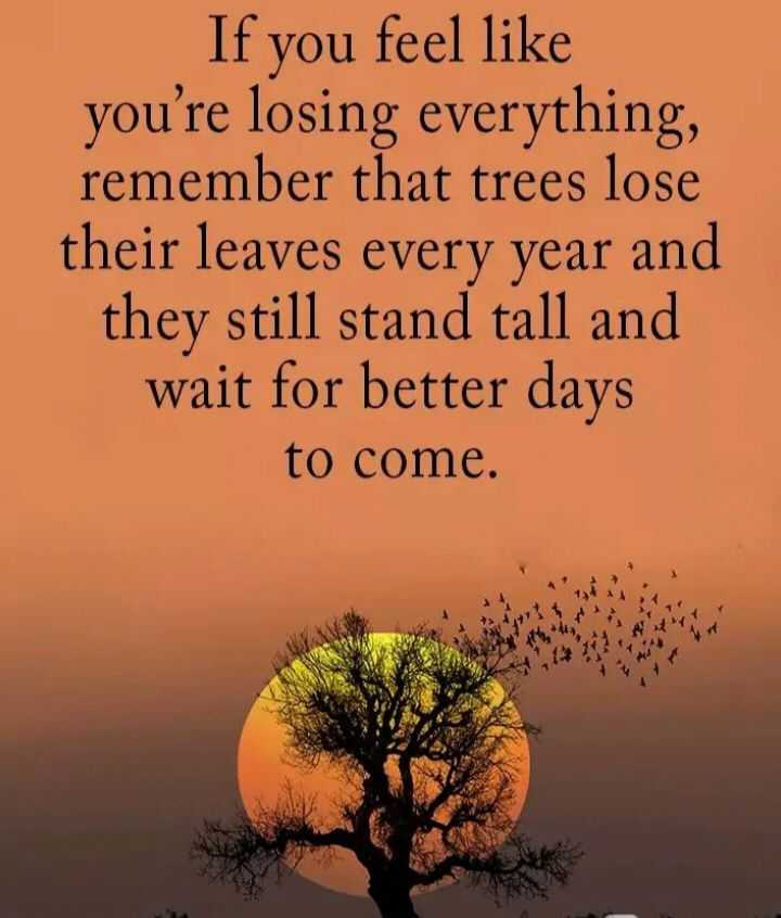 🖋 शेयरचैट Quotes - If you feel like you ' re losing everything , remember that trees lose their leaves every year and they still stand tall and wait for better days to come . - ShareChat
