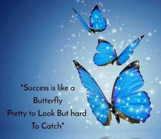 🖋 शेयरचैट Quotes - Success is like a Butterfly Pretty to Look But hard To Catch - ShareChat