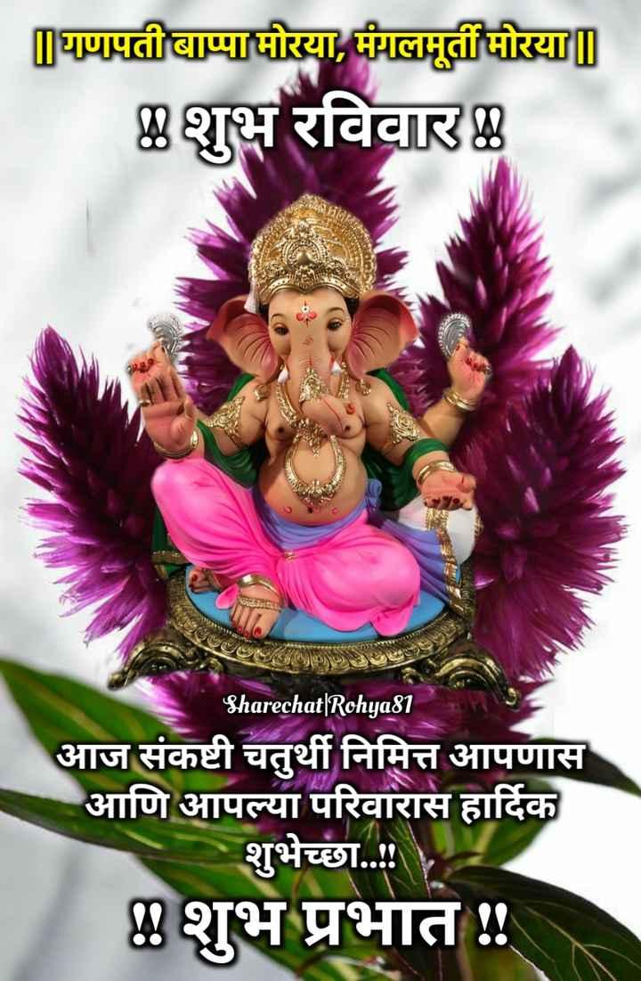 🌺 संकष्टी चतुर्थी - घणपती बाप्पामोरया , मंगलमूर्ती मोरया | | शुभ रविवार Sharechat | Rohya81 आज संकष्टी चतुर्थी निमित्त आपणास आणि आपल्या परिवारास हार्दिक शुभेच्छा . . . ! ४ शुभ प्रभात ! ! - ShareChat