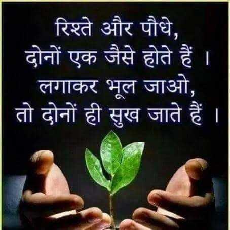 👌सुन्दर विचार - ' रिश्ते और पौधे , दोनों एक जैसे होते हैं । ' लगाकर भूल जाओ , | तो दोनों ही सुख जाते हैं । - ShareChat