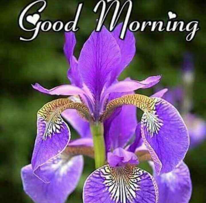 🌞सुप्रभात🌞 - Good Morning - ShareChat